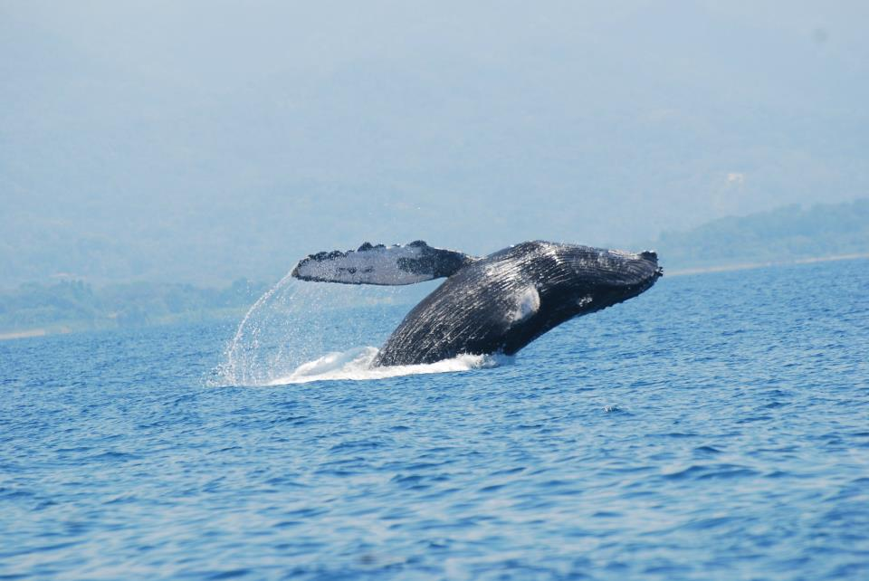parque-marino-ballena-costa-rica-uvita