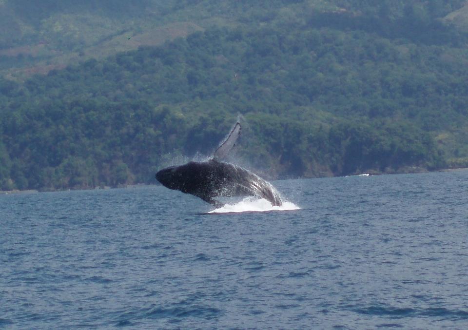 ballena-costa-rica-marino-parque-nacional