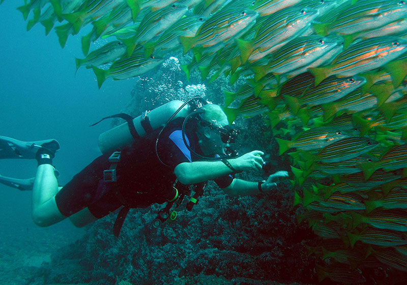 scuba-plongee-costa-rica-isla-del-caño