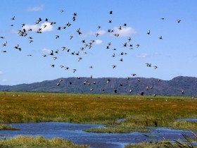 Humedal Palo Verde – Isla Pájaro