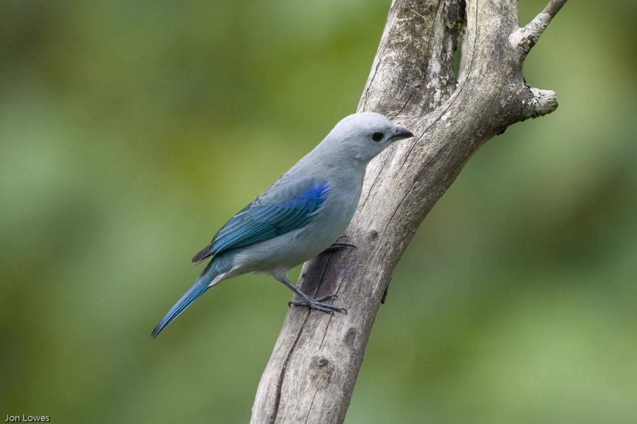 Birdwatching-Boat-Tour14