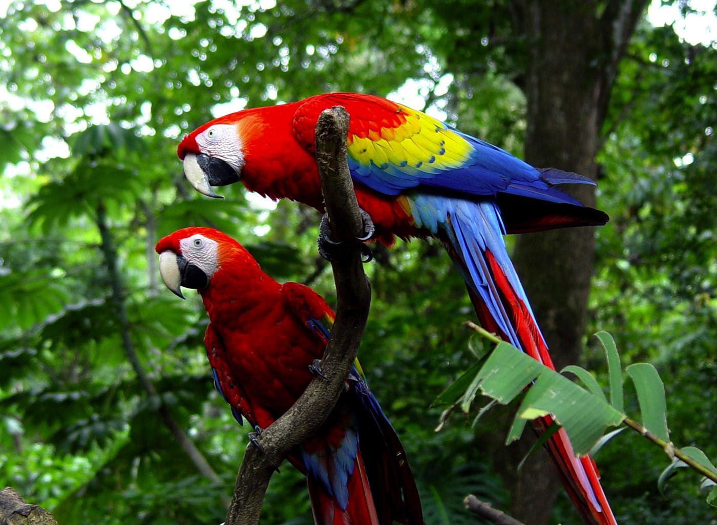 Costa-Rica-Carara-Lapas