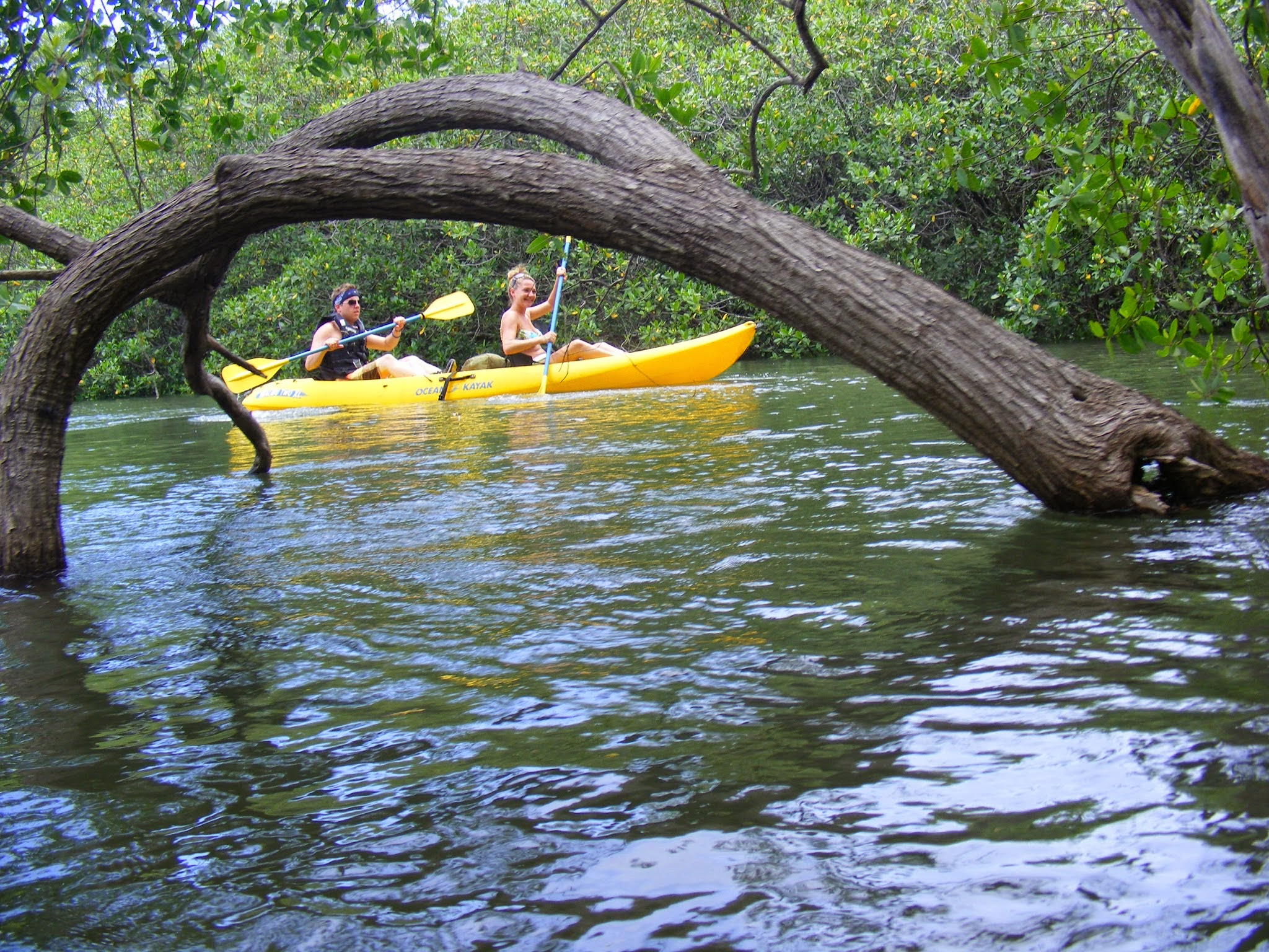 Kayaks-Estuary-2