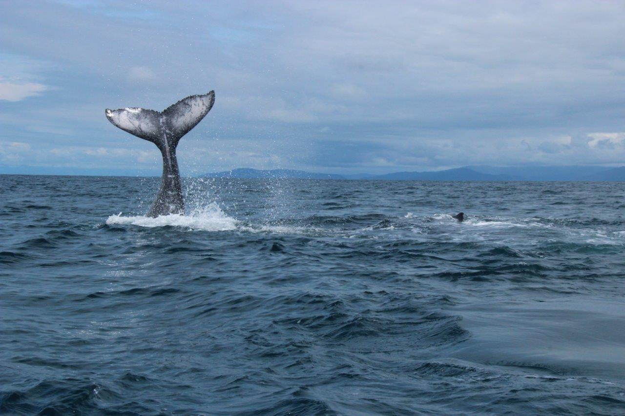 Tour-de-Ballenas-y-delfines-2