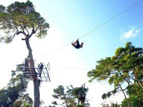 Canopy Cartago