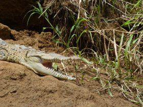Safari cocodrilos nocturno