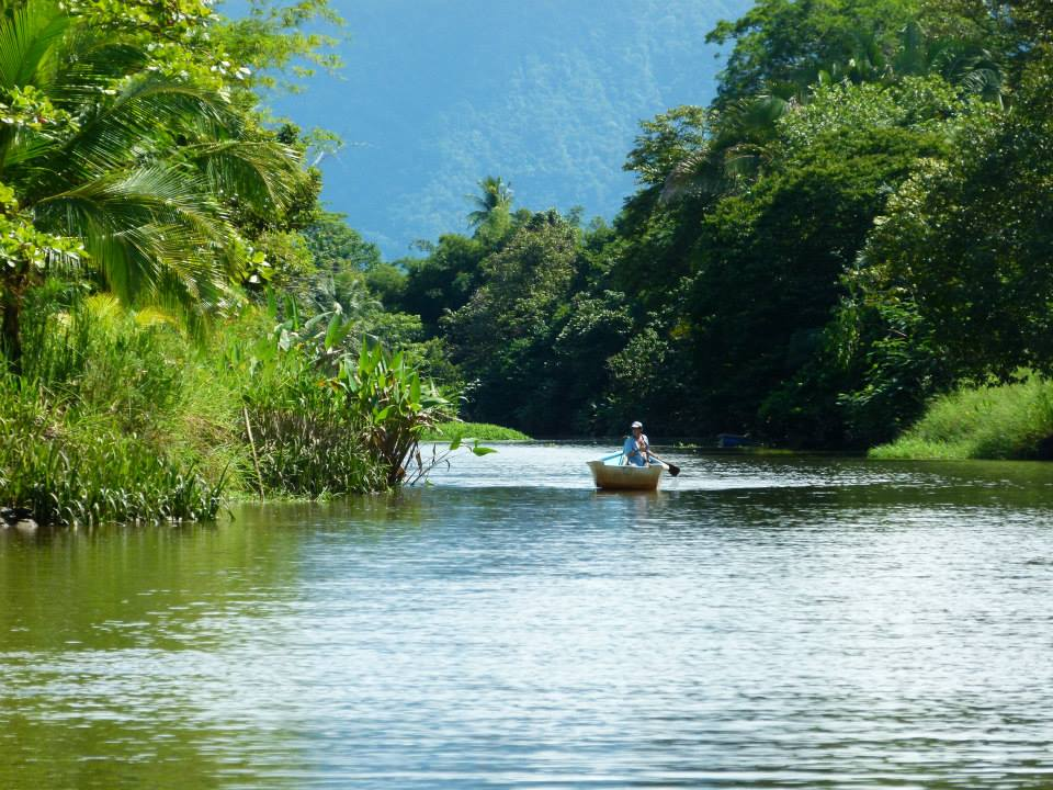 manglar-mangrove-costa-rica-terraba-sierpe