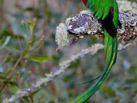 Aves de las Verapaces