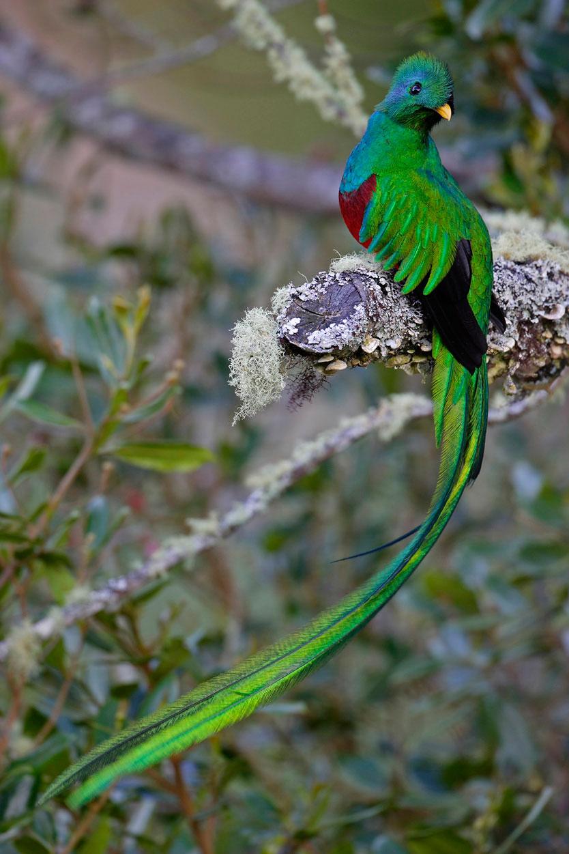 quetzal-guatemala